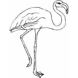 Flamingos Coloring Pages To Kids