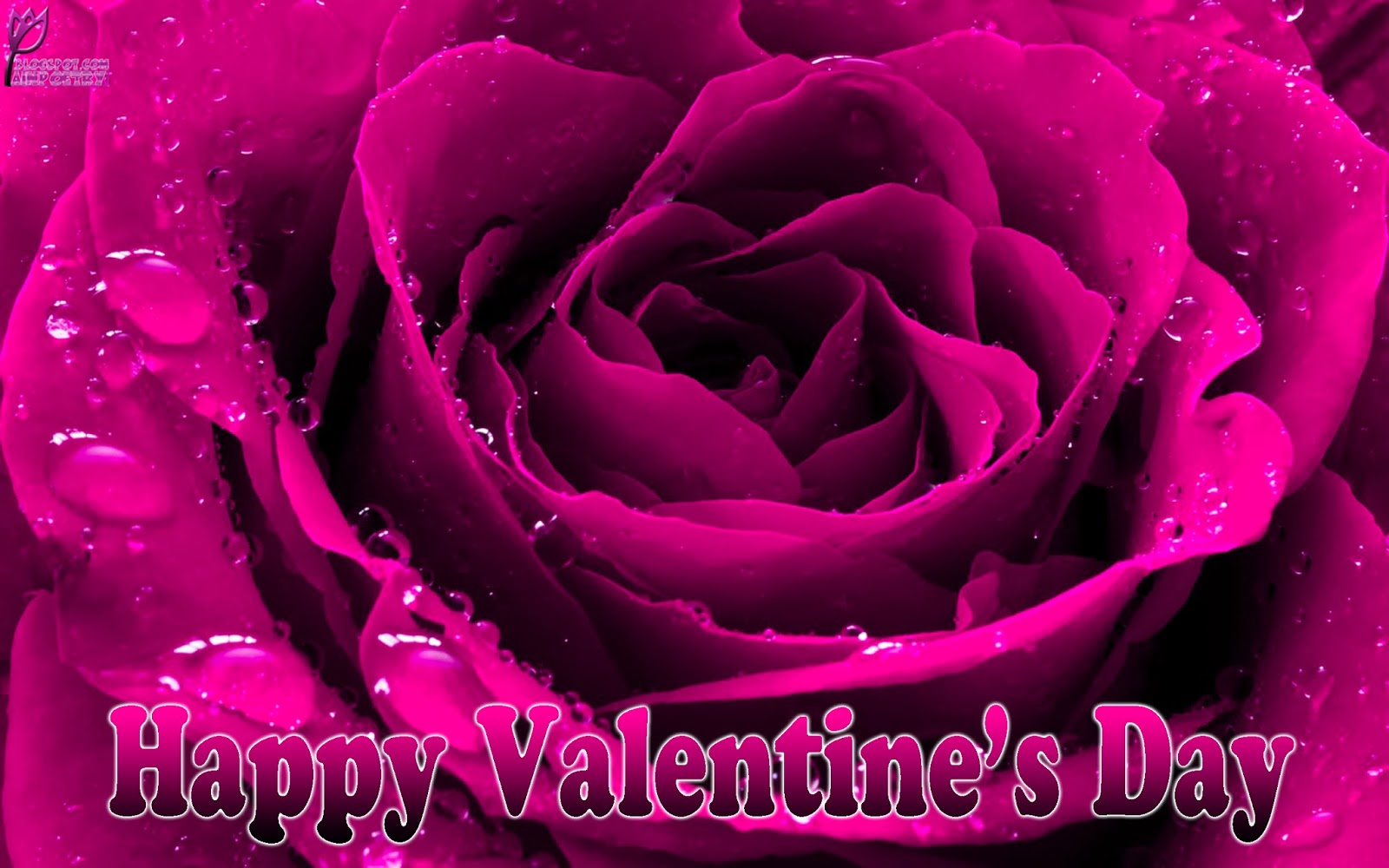 Happy-Valentines-Day-Wallpaper-With-Flower-A-Special-Gift-Image-HD