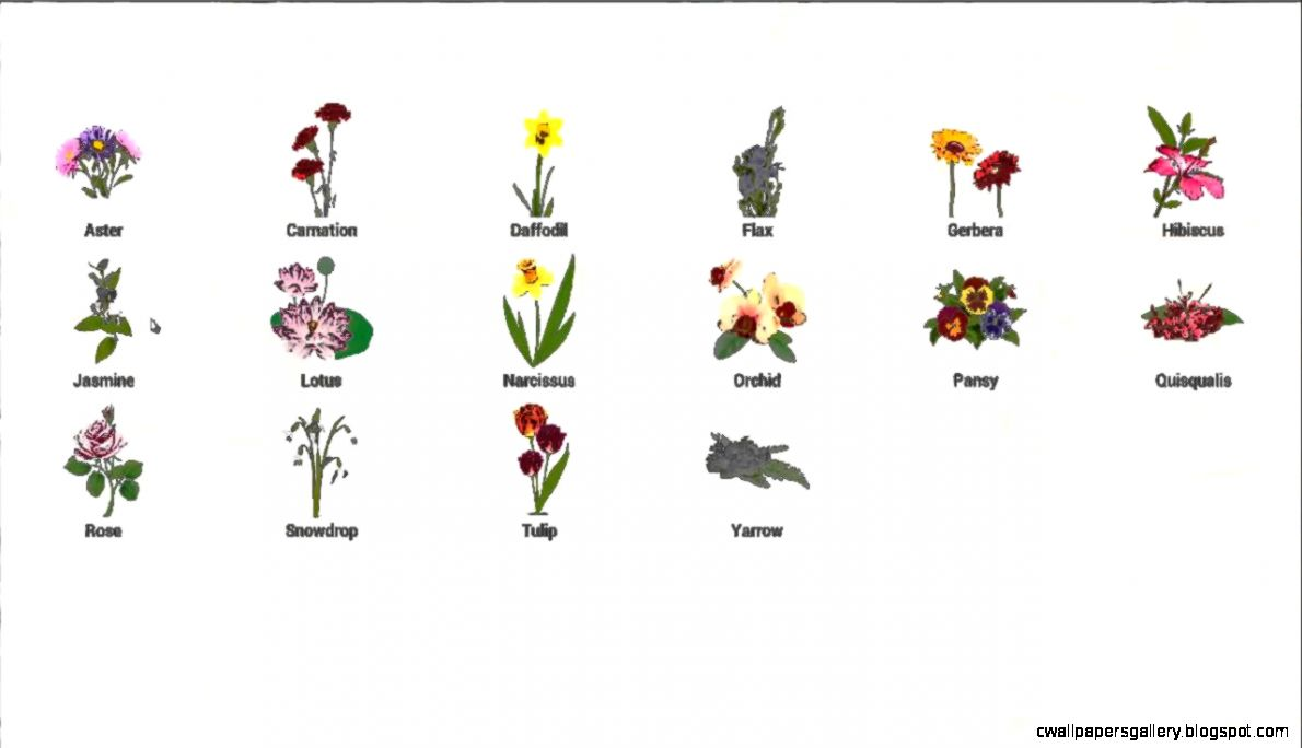 Flower names for children   YouTube