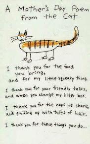 CAT MOMS