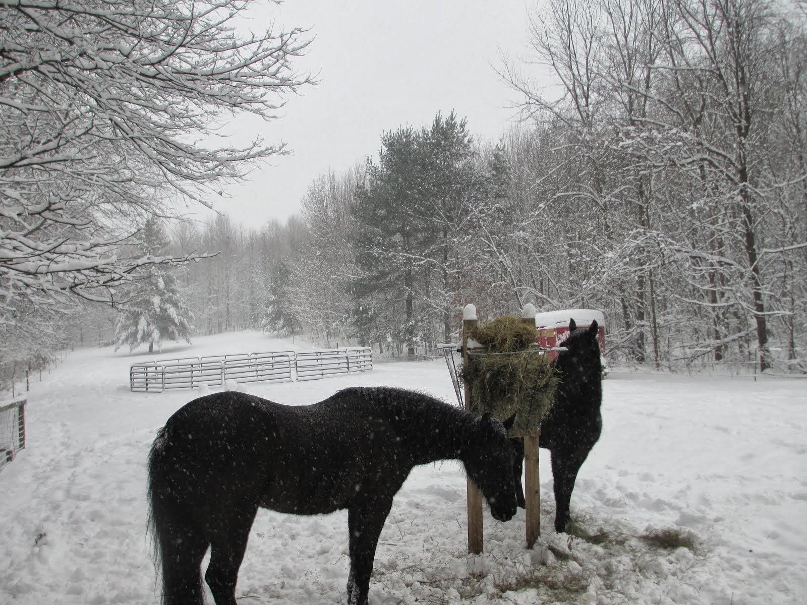 Horse Talk Indiana