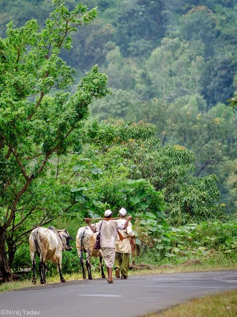 indian village life, bhandardara photos
