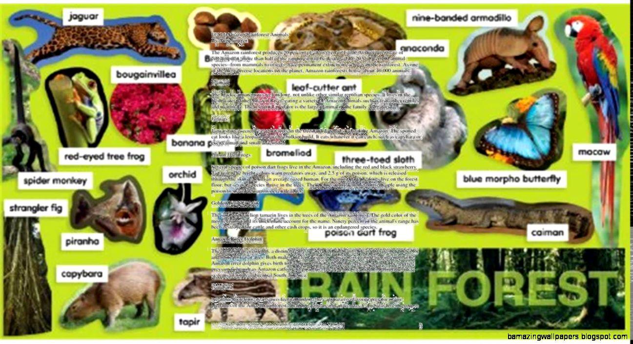 rain forest animals list | amazing wallpapers