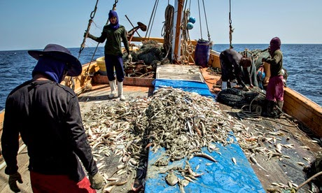 http://www.nbcnews.com/science/environment/overfishing-drives-thai-boats-use-more-slave-labor-n312746