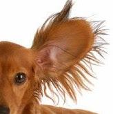 oreja de perro