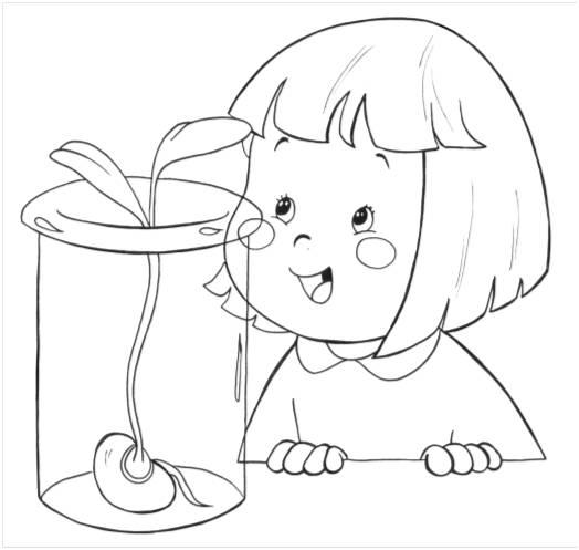 Germinación de la planta para colorear - Imagui
