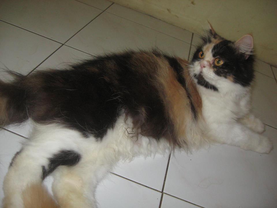 Kandang Kucing Dijual Murah Dijual Kandang Kucing Anjing
