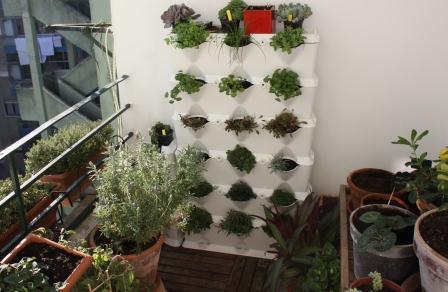 Rosa bailarina plantas arom ticas em casa - Plantas aromaticas exterior ...