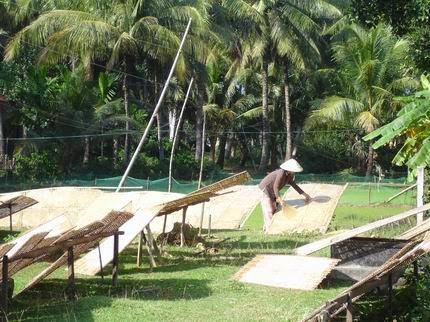 Phơi bánh tráng dừa Tam quan