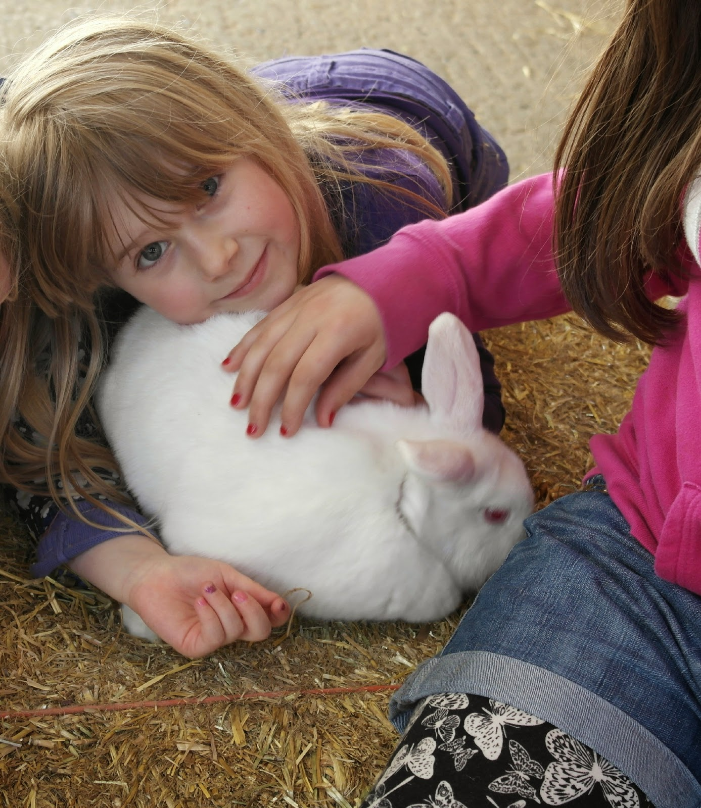 Petting Rabbits at Mead Open Farm