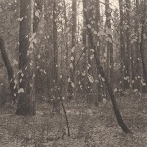 Bosque Shikama