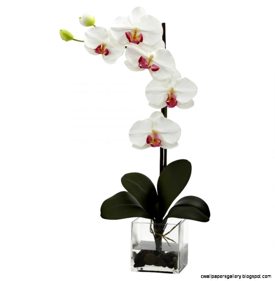 Giant Phalaenopsis White Orchid Silk Flower Arrangement with Vase