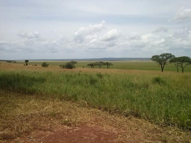 Silale Swamp Tarangire National Park Tanzania