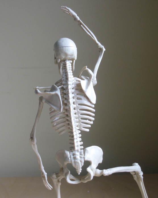 Illustration Fixation Skeleton Model