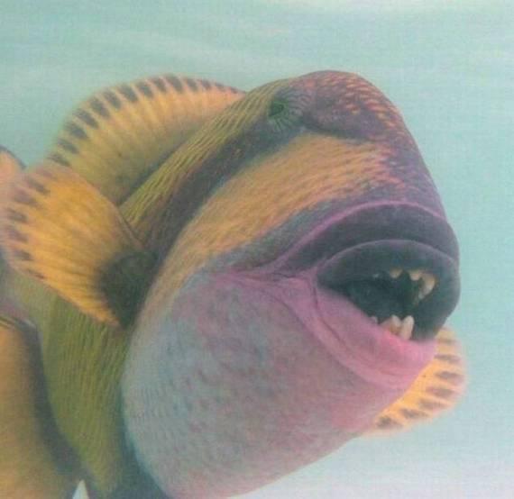 peixe-estranho