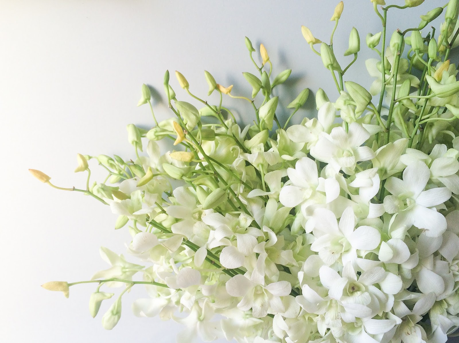 Seasonal change behind the camera and dreaming the beautiful flowers found in this post are co proflowers where you can still find these inspirational summer blooms and grab a coupon here izmirmasajfo