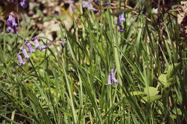 Walk in St Ives flowers