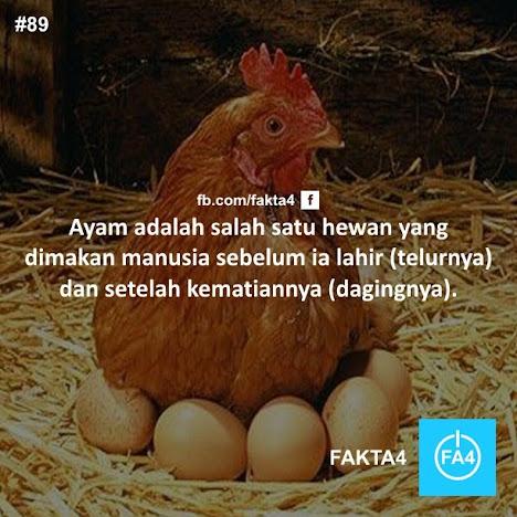ayam daging, dan telurnya