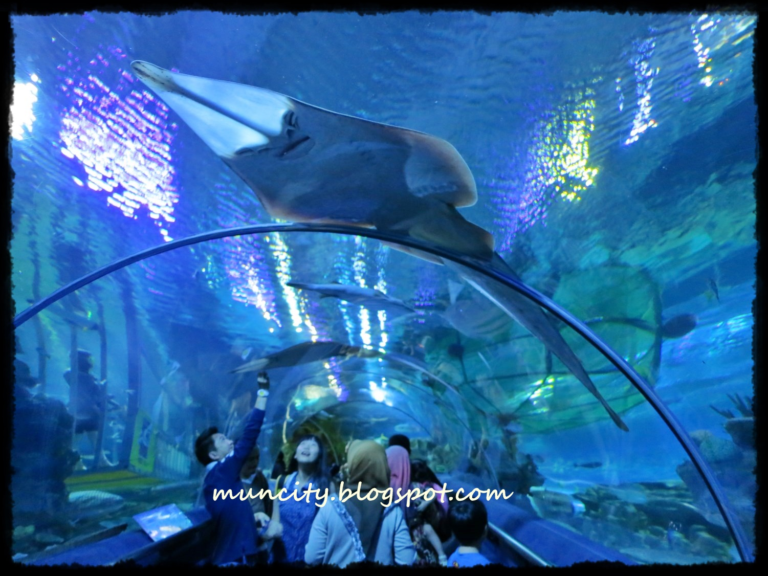 Travel Photography | Aquaria KLCC »