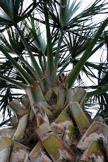 """Palm Burst"""