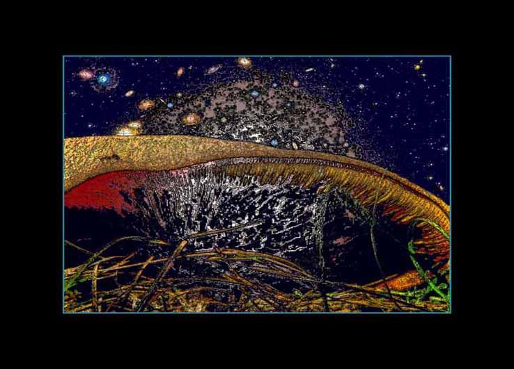 Gljiva, mrav i Veliki Prasak