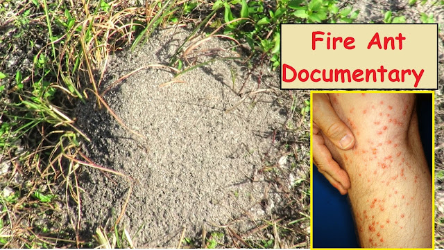 Disturbing Fire Ant Mounds Documentary