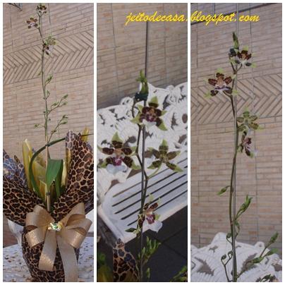 orquidea colmanara