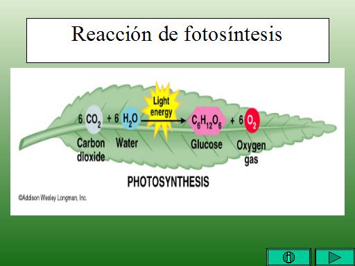 Ecuacion de la fotosintesis balanceada 25
