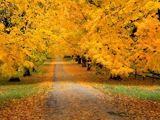 NaSHz NaSRuLz     4 Seas0n   Musim Luruh   Autumn