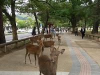 歩道はせんべいをあげる人たちに集まる鹿たち