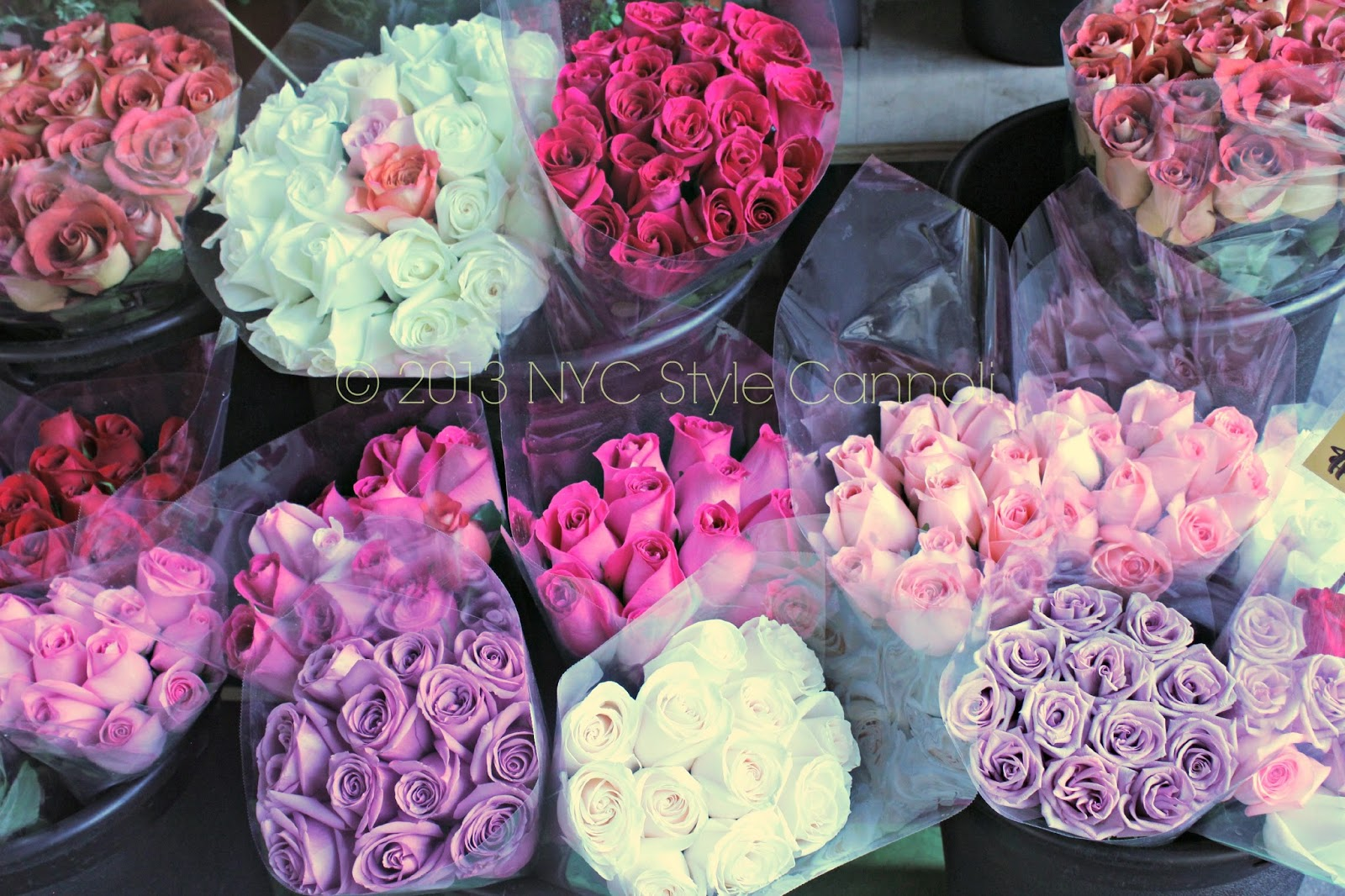 Daisy flower shop nyc style a little cannoli the price is just laughable i would buy roses every week at this price izmirmasajfo
