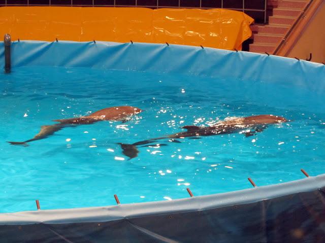 Дельфины в Гомельском цирке