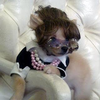perros+chistosos+disfrazados+mujer Imagenes de Perros Chistosos..