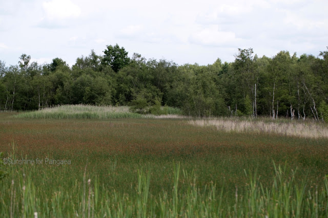 the fen in Soos