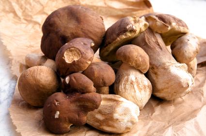 conservazione funghi porcini