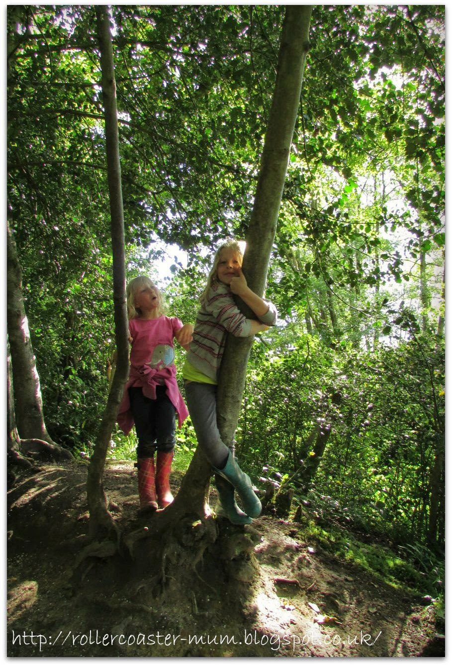 hugging a tree, Pooh Bridge
