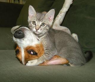 Katze umarmt Hund
