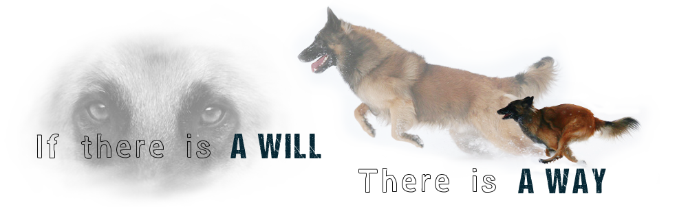 If there is a will there is a way