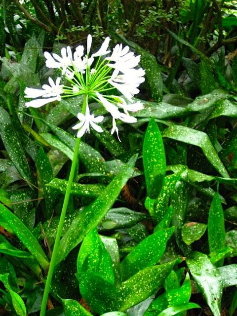 Flowers in Xitou Nature Recreation Area Nantou Taiwan