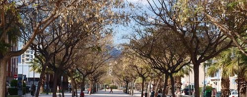 Asociacion Vecinos Bulevar Vicente Blasco Ibañez