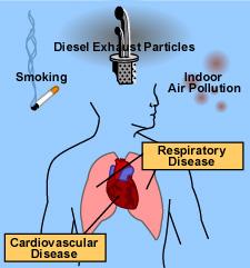 Effects Cardiovascular Health May Impact Brain