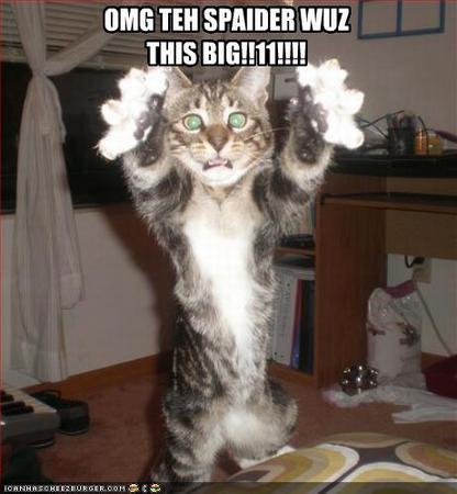http://3.bp.blogspot.com/-pn7dj_adm4I/TgdMY63ai6I/AAAAAAAAAJA/Aebj0n1YOqk/s1600/lol-cats1-lrg1.png