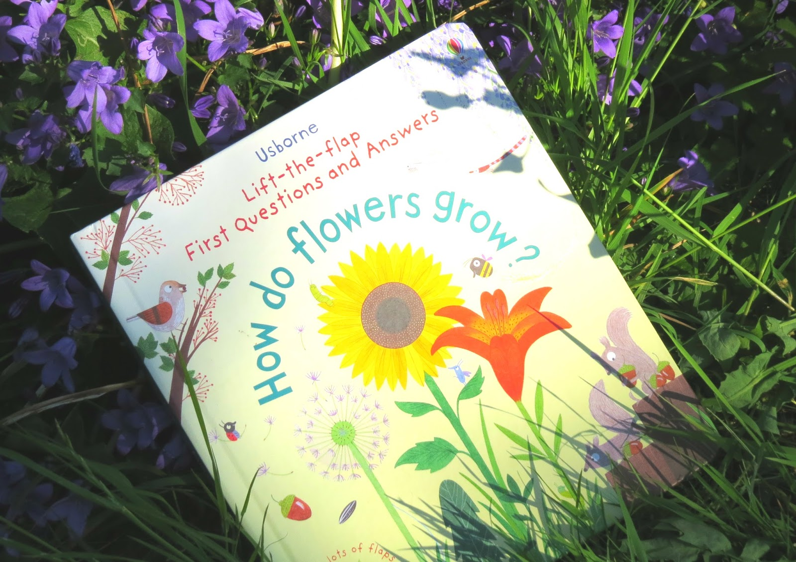 how flowers grow  flower, Natural flower