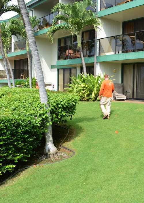 Kauai landscaper no ka oi landscape services blog for No maintenance flowering shrubs