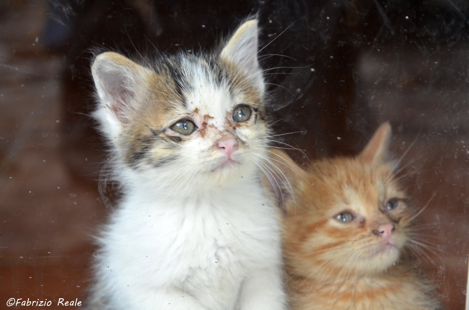 Fabrizio reale fotografie due piccoli gattini dietro for I gattini piccoli