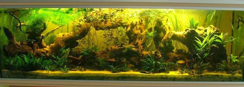 La vie de mon aquarium