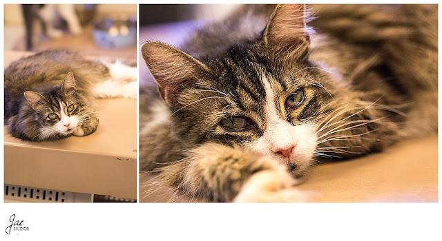 Non Profit Adoption Portrait Lynchburg Humane Society
