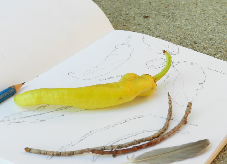 garden vegetable pencil sketches by Elise Engh