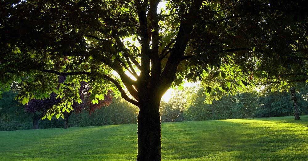 Arte y jardiner a dise o de jardines informe sobre el for Diseno de jardines 3d 7 0 keygen