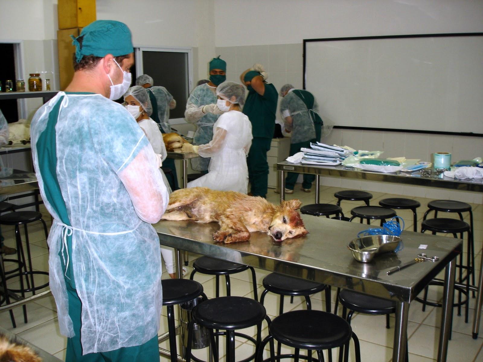 Curso de medicina veterinaria